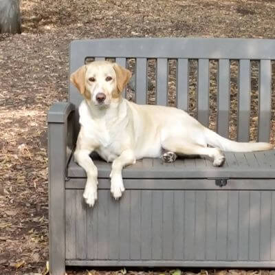 Dog relaxing on bench